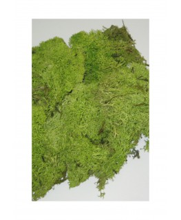 boîte de 45gr de mousse d'Islande -  vert clair ( 606238 )