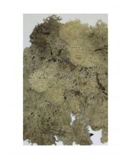 boîte de 45gr de mousse d'Islande - naturel ( 606236 )