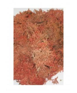 boîte de 45gr de mousse d'Islande - rouge ( 606246 )